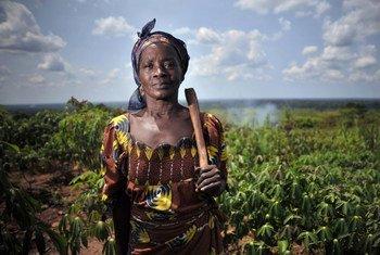 Una mujer en un campo de yuca en Mbaiki, República Centroafricana.