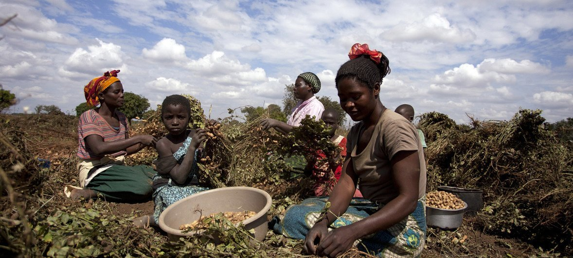 World Food Day: here's what the UN is doing to fix 'intolerable' wrong of hunger