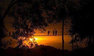 Machwewo kwenye hifadhi ya taifa ya Nyungwe nchini Rwanda