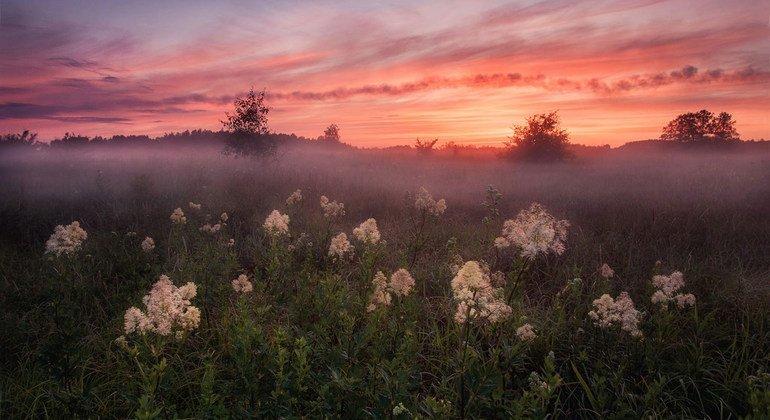 A summer evening in Smolensk, Dorogobuzh, Russian Federation.