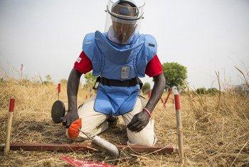 Subek Steven Severino, étudiant en recyclage de déminage manuel, poursuit un exercice d'excavation pour identifier les signaux provenant du détecteur.
