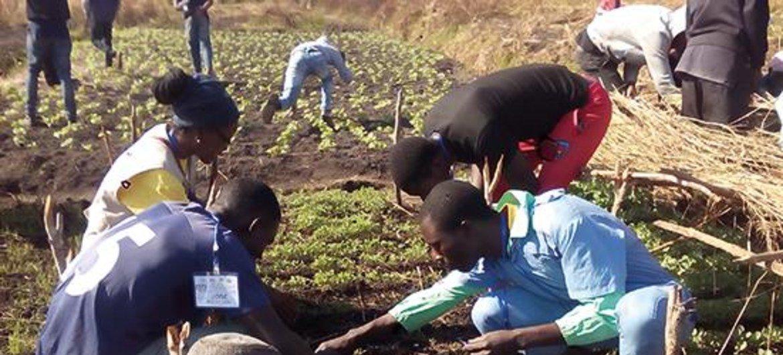 Programa Trabalho Decente de Angola foi assinado pelo Governo de Angola e pela Organização Internacional do Trabalho, OIT.