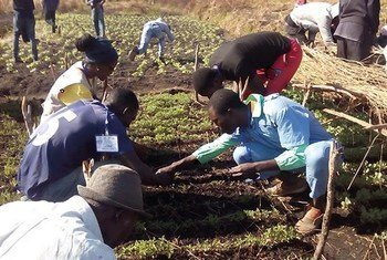 Agricultura é a área destacada para investimento estrangeiro