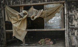 Confrontos e situação socioeconômica empurram dezenas de milhares de birmaneses para a pobreza