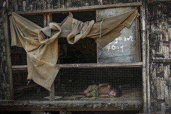 म्यांमार के राखीन प्रांत के एक राहत शिविर में लेटा बच्चा.
