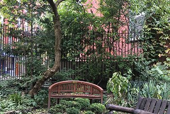 community gardens | UN News