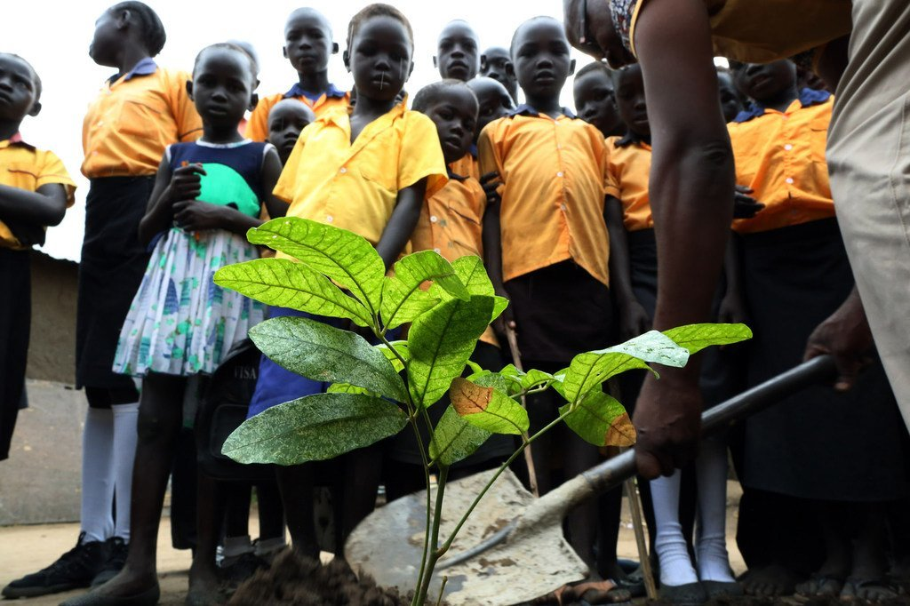 Trees donated by the UN peacekeeping mission in South Sudan, UNMISS are planted at the Exodus Junior Academy in the capital, Juba. (October 2018)