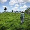 Farmers on the Azuero Peninsula in Panama are working to transform the ranching sector by promoting the sustainable agricultural practices. (October 2018)