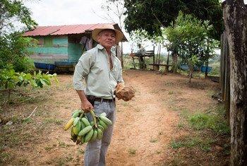Dolores Solís, un agricultor panameño que practica técnicas agroforestales que incluyen el cultivo de una variedad de cultivos, la plantación de árboles y la cría de ganado