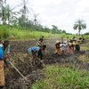 Market gardens have been established in coastal zones of the Democratic Republic of the Congo which provide employment, food and help to protect the environment. (March 2018)