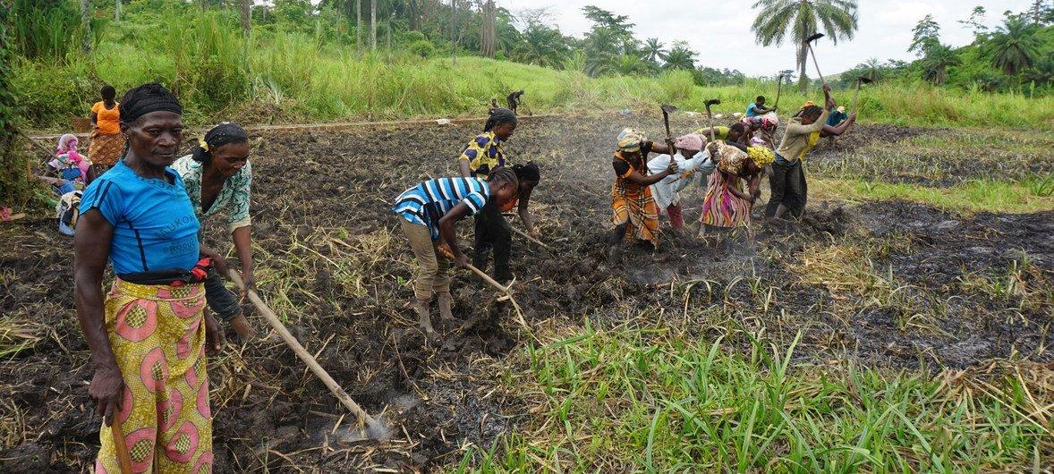Des jardins maraîchers ont été créés dans les zones côtières de la République démocratique du Congo, fournissant emplois, nourriture et aidant à protéger l'environnement.