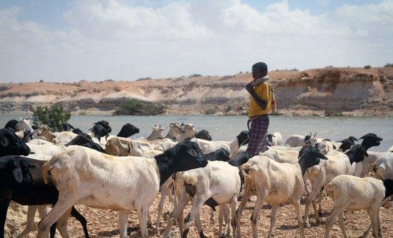 A maior parte dos fundos, US$ 30 milhões, irá para a Somália, onde se estima que que 2,2 milhões de pessoas enfrentam uma aguda insegurança alimentar até setembro.