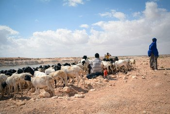 Em Puntland, na Somália, não chove há três anos