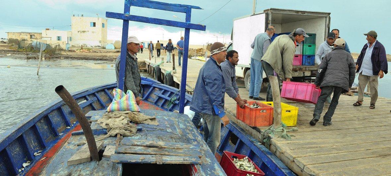 Hace veinte años los pescadores tunecinos eran capaces de pescar pulpo en la costa del país norafricano, pero con el cambio climático ya no es posible.