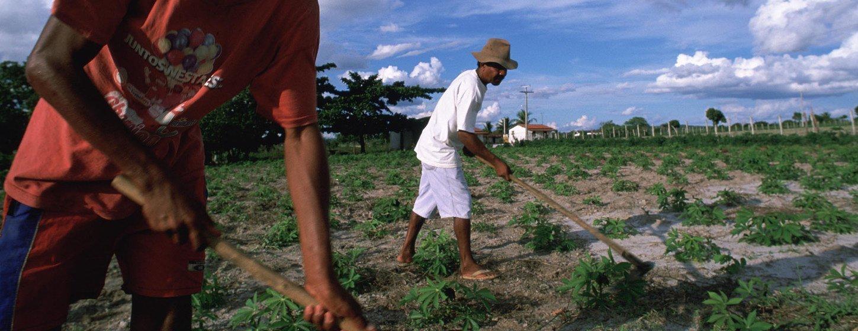 Trabajadores rurales en el Estado de Bahía en Brasil.