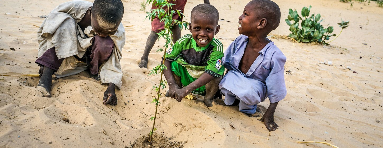 Unos niños plantan acacias en el área de reforestación de Merea, en Chad.