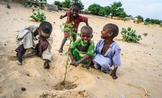 Crianças no Chade plantam uma árvore de acácia.