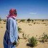 荒漠化正威胁着乍得的一个村庄。 在过去的50年里,乍得湖流域面积从25,000平方公里缩小到2,000平方公里。