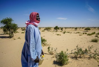 Desertification threatens the village of Tantaverom. Mbo Malloumu has taken the initiative to plant acacia seedlings to rehabilitate the land. In the past 50 years, Lake Chad basin shrank from 25,000 square kilometers to 2,000square kilometers.