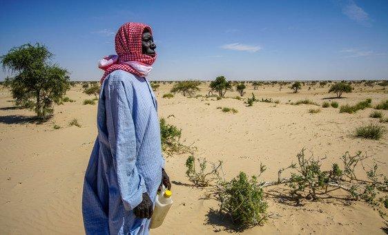 Plantio de Acácias pode ajudar a recuperar solos degradados, Pnud Chad/Jean Damascene Hakuzim