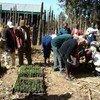 Field school members in Kenya take agro-ecosystem analysis.
