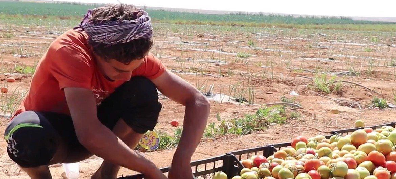 В ФАО разработали проект по оказанию помощи жителям  Алеппо