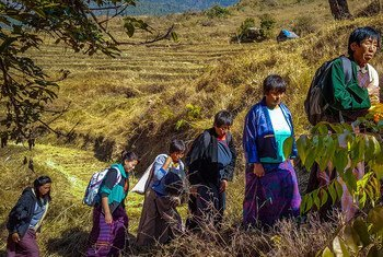 In Bhutan, local farmers are supported by a UNDP project to harness the power of unique local medicinal plants while perserving biodiversity.