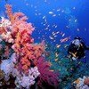 A diver on a reef in the Red Sea.