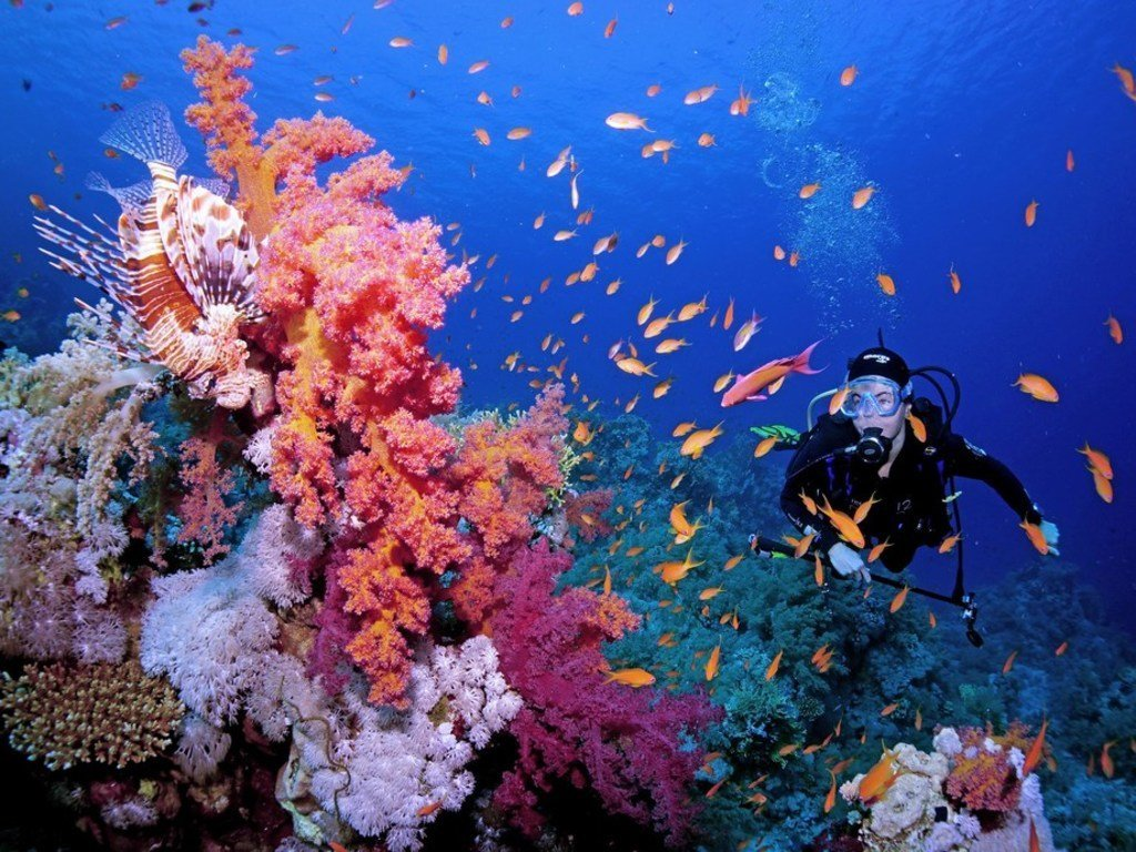 الموسيقى تنقذ الشعاب المرجانية