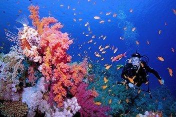 Un plongeur en mer Rouge.