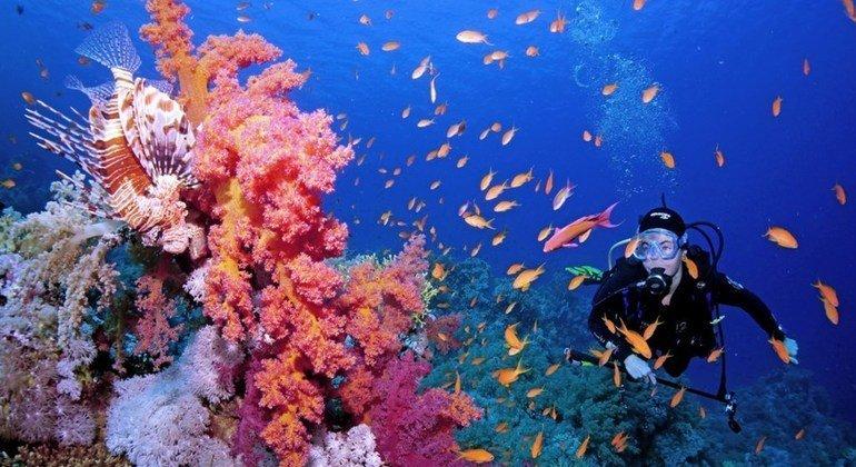 منطقة مليئة بالشعاب المرجانية في البحر الأحمر.