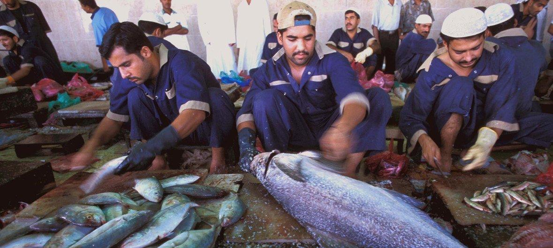 Travailleurs migrants préparant des poissons à Dubaï, aux Émirats arabes unis (archives).