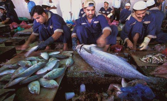 عمال مهاجرون يعدون الأسماك في أحد الأسواق بدبي في الإمارات العربية المتحدة. ويمثل العمال والموظفون المهاجرون في دول مجلس التعاون الخليجي أكثر من نصف مجموع العاملين.
