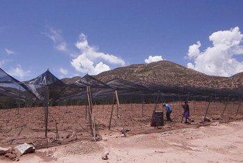 Fida está ajudando os produtores a usarem práticas tradicionais em estratégias de adaptação para a mudança climática.