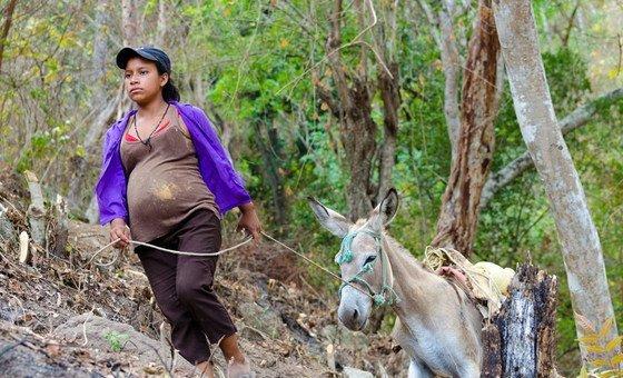 Uma mulher de Sinaneca se envolve ativamente na construção da represa que fornecerá água para a comunidade. Ela guia os burros que carregam materiais de construção, como areia e pedras, até o canteiro de obras