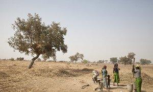 Conflito, clima e crises na economia limitam o acesso aos alimentos.