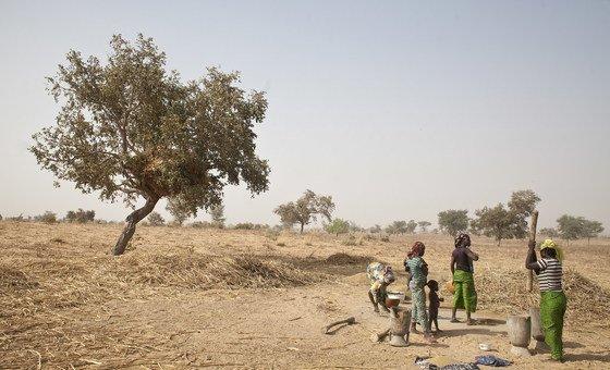 24 de fevereiro de 2013, aldeia de Koulomboutej, Níger - Mulheres moendo e peneirando sementes de milheto.