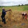 दक्षिण-दक्षिण सहयोग के तहत मिली ट्रेनिंग और तकनीकी जानकारी से अफ़्रीका में चावल उत्पादन बढ़ाने में मदद मिली है.