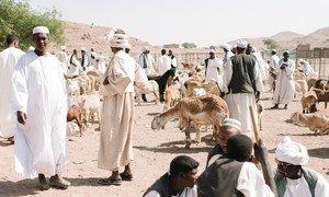 Soko la Mifugo, Sudan.