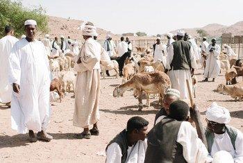 Mercado de gado perto Gadaref, no Sudão.
