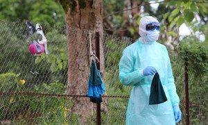 Watafiti nchini Sierra Leone wakichunguza virusi vya Ebola kutoka kwa popo