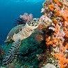 Коралловые рифы гибнут в результате деятельности человека.