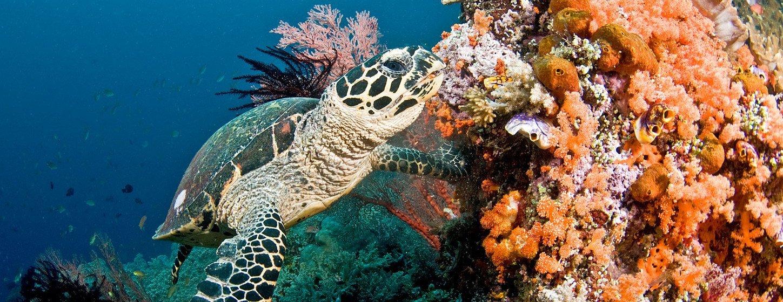 Estamos hirviendo vivos los arrecifes de coral | Noticias ONU