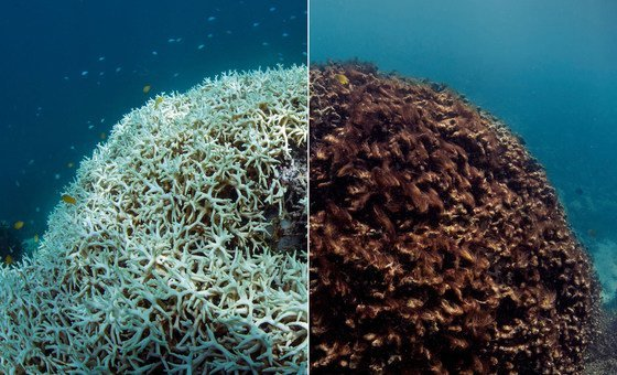 Before and after: Coral bleaching in the Great Barrier Reef.