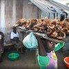 A girl sells dry fish in New Kru town, Liberia.