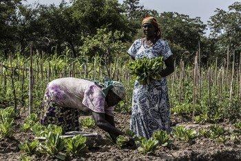 Des femmes centrafricaines dans la préfecture de Vakaga, en République centrafricaine (RCA)