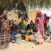 2019年1月,尼日利亚的新流离失所者。由于营地过度拥挤,人们不得不在树下栖身。