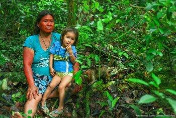 Reserva comunal Amarakaeri, área natural de 402.335 hectáreas protegida por las comunidades harakbuts, yines y machiguengas en Madre de Dios, en la Amazonía de Perú.