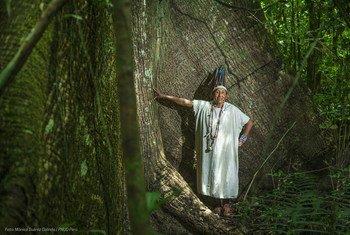 阿马拉卡里社区保护区(Amarakaeri Communal Reserve)是一个由秘鲁亚马逊地区10个社区管理的面积为40多万公顷的自然保护区。