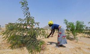 Cameroon. Minawao, the green refugee camp. (January 2019)